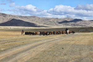 ©http://mymongolianepic.blogspot.co.uk - NOMADIC HERD ON THE MOVE